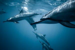 Delfini e cuore verde